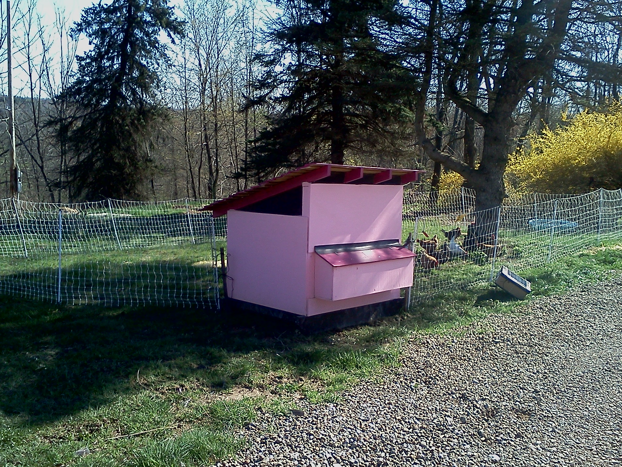 The coop with electric net fencing and protected happy chickens